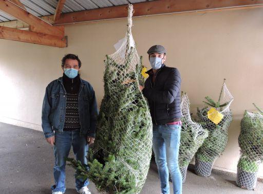 154 sapins pour les fêtes de Noël